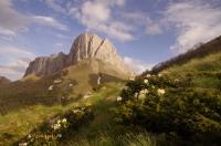 Ачешбок Восточный Цветущий рододендрон на фоне горы Ачшебок перевал Чертовы ворота