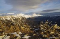Фигурные можжевельники на горе Черногор Черногор, вид на Фишт