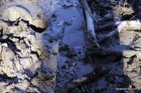 Грязевой вулкан в Шапсугской грязевой вулкан в лесу у станицы Шапсугская