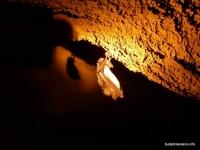 Летучая мышь в пещере пещера Амбицукова