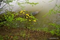 Азалия на Самурском озере цветы Озеро Самурское