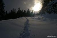Путь к Яворовой Поляне в феврале нечищенная дорога начинается сразу от партизанки