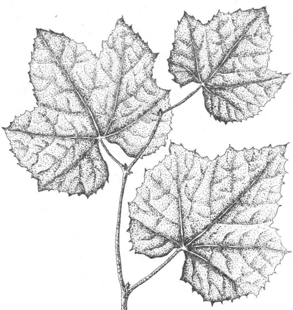 Кованые листья своими руками: технология изготовления 20